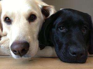 Maia & Gus